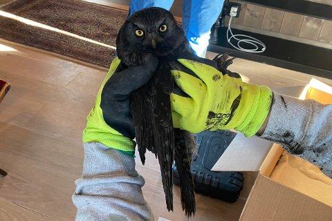 Redningsmennene hadde utstyrt seg med tykke hansker for å beskytte seg mot rovdyret som satt fast i pipa.