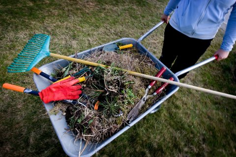 VÅROPPRYDDING: Mange rydder i hagen om dagen, men mens du i Kongsberg må betale for å kvitte seg med avfallet, har folk i Drammen et tilbud om gratis henting.