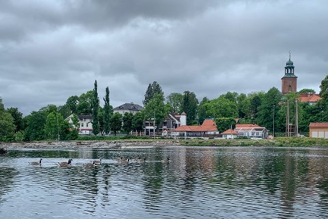 GÅSEPROBLEMER: Kanadagjessene i Magasinparken har vært en utfordring for Kongsberg kommune lenge. Nå anmeldes de for masseskytingen forrige uke.