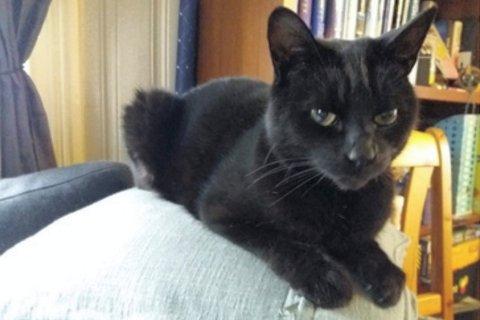 UTE PÅ VIFT: Katten Storm har tatt turen til Sjåstad. Nå håper Hilde Strysse i Kattehjelpen at eierne vil melde seg.