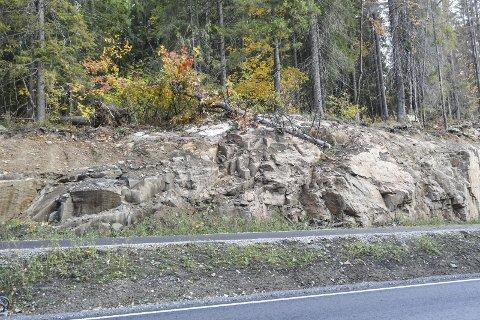 FALT: Langs Gjellebekkveien ligger det flere trær på bakken inne på det verneverdige området. For bare noe uker siden falt et tre over gang- og sykkelstien, men ingen ble skadet. FOTO: Guro Haverstad Torgersen