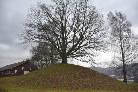 Ligger det vikinghistorie her? Et av spørsmålene som kan besvares med en georadar er om det ligger vikingminner under gravhaugene på Huseby gård.