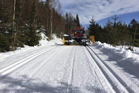 Fantastisk skiføre: Denne påsken trenger du ikke å dra til fjells for å finne flotte skiløyper. I Lier er det nå bortimot 250 kilometer med skiløyper. Her fra Kjekstadmarka.Foto: Nils Haugen
