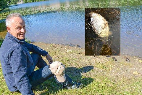IKKE OVERRASKET: Borgar Pedersen i Drammen sportsfiskere mener situasjonen i Damtjern fortsatt er svært dårlig, og er ikke overrasket over at det nylig ble funnet død fisk i tjernet. FOTO: STEIN STYVE. INNFELT FOTO: OLE ELLEVOG