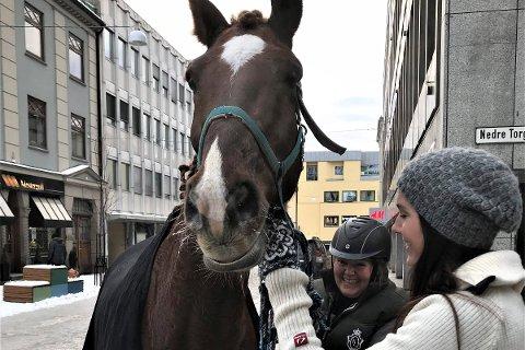 En meget lykkelig hesteeier er gjenforent med rømlingen.
