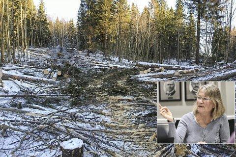 Opprørt: Janicke Karin Solheim (innfelt) ønsker stopp i nedhoggingen av skogen på Tranby.