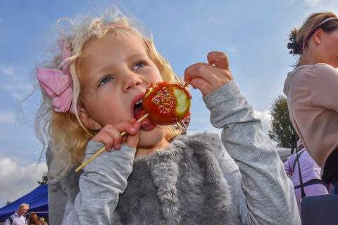 Hovedrollen: Søndag er det epler – i alle varianter – som står i fokus på bygdetunet når familiearrangementet Eplefestivalen går av stabelen. Arkivfoto.