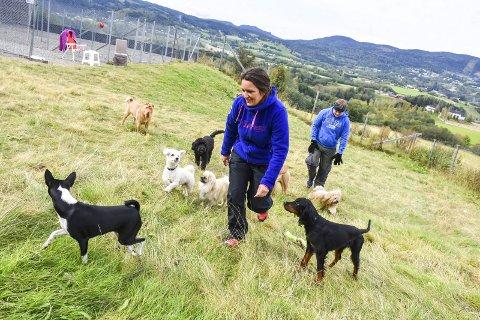 Full fart: Charlotte Rosseland har mer enn nok å holde fingrene i hele dagen, men tar gjerne imot flere hunder. Hun har flrere medhjelpere, blant annet Kristian Sommerstad (15). Foto: Cecilie Johannessen