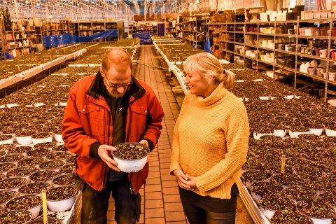 Oppvarmet hele året: Drivhusene til Lier Planteland er oppvarmet hele året, og snø som faller på taket smelter av varmen. - Vi har produksjon gående hele året, sier produksjonssjef Per Stentsøe og daglig leder Lisa Gehrt.