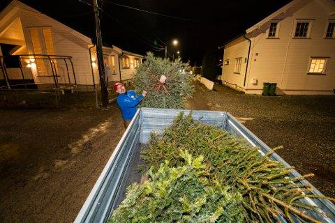 SAMLER INN: Frode Kristiansen samler inn juletrær i Lillestrøm slik at folk enkelt og raskt skal kunne kvitte seg med juletreet sitt. Responsen på tilbudet har vært over all forventning.