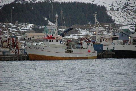 Overskudd: «Tangstadværing». Foto: Kai Nikolaisen