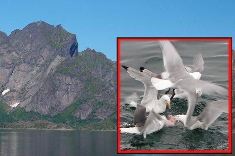 Sjømat Sakrisøy God mat og fantastisk utsikt tilbyr Sjømat på Sakrisøy