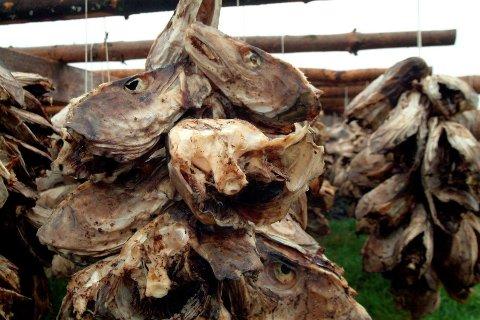 SUR: En fiskekjøper som hengte hau etter i juni, måtte kassere nesten ti tonn på grunn av at hauene surnet.