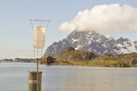 Målinger: Disse oppsamlingsbeholderne har vært brukt i to år for å måle støvnedfallet fra bedriften Lofotpukk på Rækøya i Kabelvåg. SINTEF Molab AS konkluderer med at nedfallet ikke representerer noe unormalt. Foto: John-Arne Storhaug.
