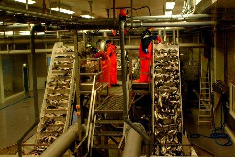 SILD: Norsk sild er populær. Ill.foto