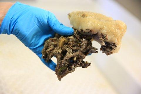 Denne svampen vokser på død korall i Hola utenfor Vesterålen
