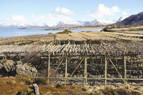 VERDENSARV: Tørrfisken er sentral i en eventuell verdensarvsøknad for Lofoten.