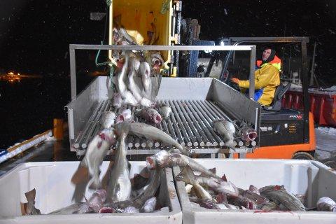ØKER;: Minsteprisen på torsk går opp fra mandag.