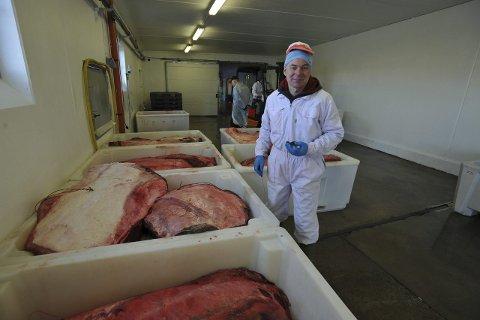 KJØPER KVAL: Rune Frøvik i Lofothval AS bekrefter at de blir å kjøpe kvalkjøtt også denne sesongen.