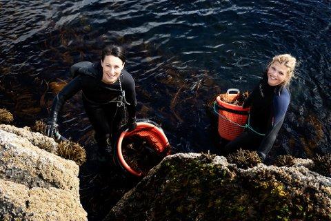 SAMARBEID: Lofoten Seaweed har inngått et samarbeid med Sørlandschips.