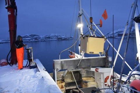 HATTVIKHOLMEN: Lofoten Fish Export AS økte omsetningen fra 2018 til 2019. Det gjorde også lønnskostnadene.