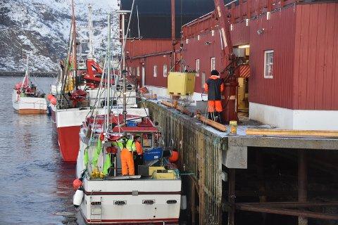 Stor aktør: Gadus Norway i Henningsvær er en stor aktør i fiskerinæringa i Vågan.