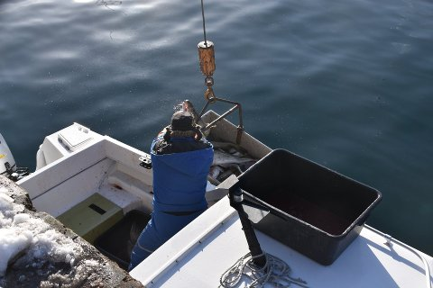LEVERING: Norges Råfisklag oppfordrer alle til å ta kontakt med kjøper før de går på havet.