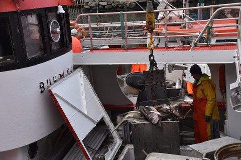 ØKNING: Havforskerne foreslår at kvotene økes med 20 prosent til neste år.
