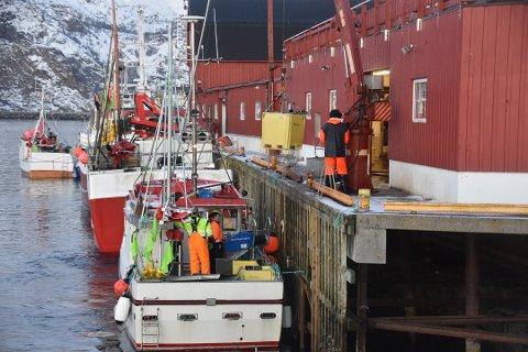 REKORD: I fjor satte Gadus Norway AS ny omsetningsrekord