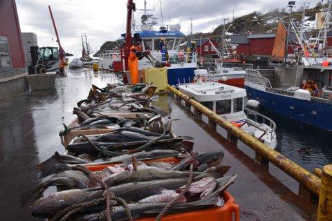 MINSTEPRIS:  Fra mandag satte Norges Råfisklag ned minsteprisen for torsk.