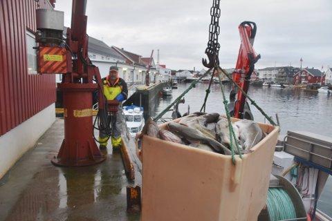"""OVERFØRE: Geir Pedersen på """"Hornsund"""" og alle andre fiskere som har kvote kan fiske 10 prosent av årets kvote til neste år."""