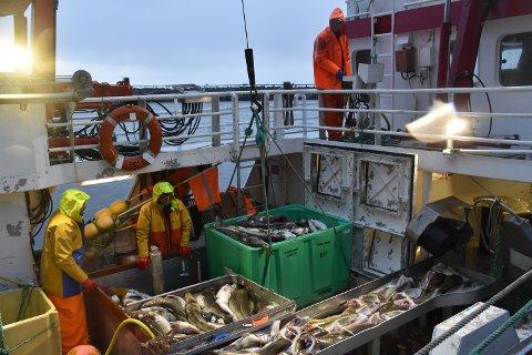 """REDUKSJON: Havforskerne foreslår at """"Feskargutten"""" og de andre som fisker etter torsk får kvotene redusert med 20 prosent til neste år."""