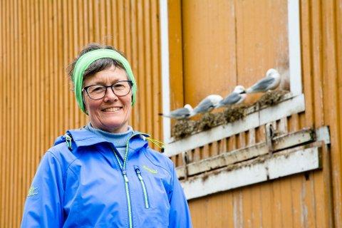 KRYKKJAS SISTE SKRIK: Krykkjene står i fare for å bli utryddet langs norskekysten. Tilbakegangen har vært dramatisk også i Moskenes hvor Ingjerd Anna Martinsen bor. Her besøker vi krykkjene på Tind.