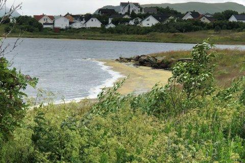 VIL HA OPPRYDDING: Arne Arctander vil ha bedre gjennomstrømming av sjøvannet og slamsuging av av strandsonen i Halsvågen.
