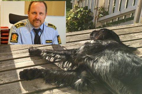 Fungerende lensmann Dag Sture Strøm (innfelt) oppfordrer folk til å kontakte politiet hvis de oppdager dyr i overopphetede biler. Hunden på bildet har ingenting med artikkelen å gjøre.