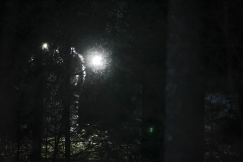 GRUNDIG: Krimteknikerne jobbet mandag ettermiddag i skogholtet der den døde ble funnet.