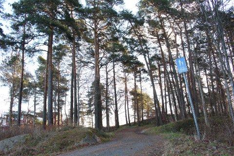 FALLER? Skogholtet fungerer som et rekreasjonsområde. Til høyre i bildet er det noen trær som står skjevt. Om de er i ferd med å falle er usikkert.