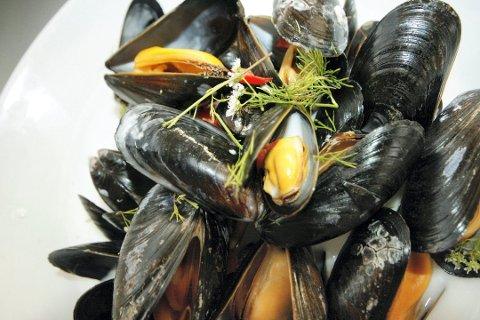 KAN VÆRE FARLIG: Matportalen advarer nå mot å spise selvplukkede blåskjell i Østfold og Follo.
