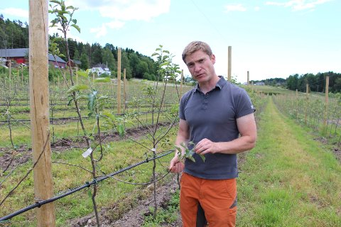 EPLER: Harald Borgebund fra Råde produserer epler på den konvensjonelle måten i år.
