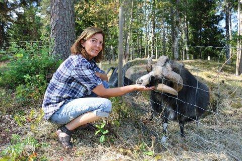 Sauene kom til Liss Christine Holme Stokker sin gård nærmest ved en tilfeldighet. Denne væren har vært her noen år.