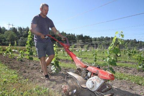 SNART VIN: Sigurd Sammerud Syvertsen er glad for at alt arbeidet på gården snart belønnes med den aller første årgangen.