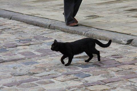 UFARLIG: – Jeg tror man trygt kan passere veien etter svarte katter og gå under stiger selv om det er fredag den 13. i dag, sier Torbjørn Brandeggen.