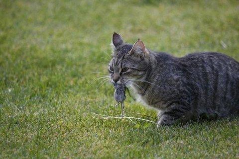 SLÅR ALARM: Dyrebeskyttelsen Norge slår alarm om katter og dyr som blir forgiftet.