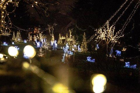 LYS JUL: Henry Pongo har som de fleste i Moss kjenner til, dekorert hagen med flotte julelys i mange år.