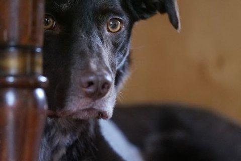 LIVREDDE: Smell fra fyrverkeri gjør våre firbente familiemedlemmer livredde på nyttårsaften. Men det finnes løsninger som kan lette kvelden for dyrene.