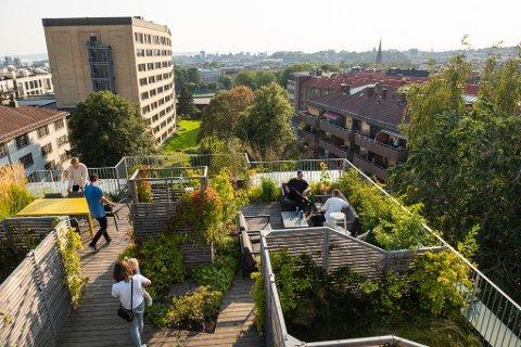 Takhager: Oslo House har vunnet priser for sine prosjekter med takhager i hovedstaden.