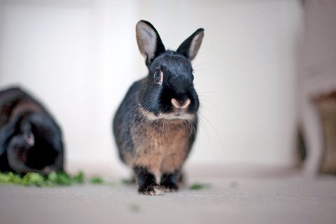 VARSKU: Mattilsynet varsler at de finner dårlig dyrevelferd hos mange kaniner. I bildet er kaninen Melis som levde et godt liv og ble hele 14 år gammel etter adopsjon fra Dyrebeskyttelsen Oslo og Akershus. Melis ble også forsidekanin på Den store kaninboka.