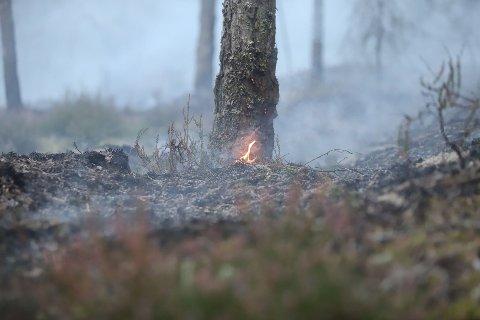 SLUKKET: Skogbrannen ved Vanem i Moss er slukket. Brannvesenet vil hente utstyr og ta en ekstra kontroll utover mandagen. Bildet er fra Søndag kveld da brannen pågikk.