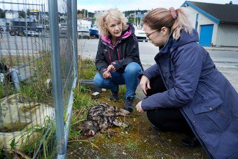 TRIST SYN: Ifølge Mette Wagnild og Ingrid Margrethe Hagerup er synet av døde katter i Rørvik sentrum dessverre ikke et uvanlig syn.