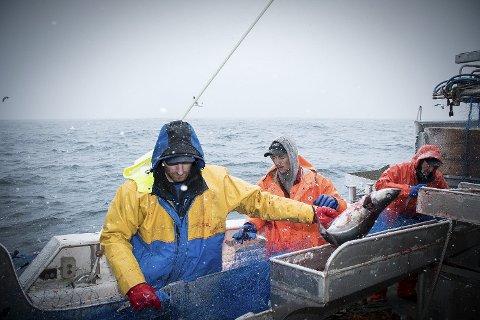 HENVENDTE SEG TIL FISKERIMINISTEREN: Viknafisker Remi Hatland var blant flere som ble kontaktet av Fiskeridirektoratet med melding om at landingsforskriften var brutt.
